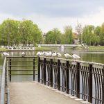Верхнее озеро (пруд) Калининград