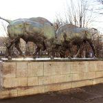 Борющиеся зубры. Калининград