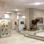 Краеведческий музей Калининграда
