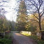 Роминтенский лес