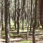 Экологическая тропа Тацующий лес