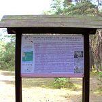 Экологический маршрут Танцующий лес
